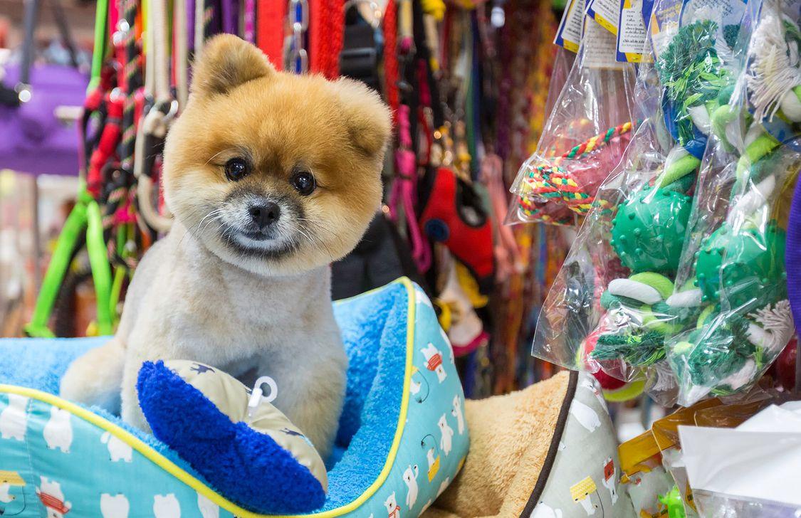 Pet Store - Negozio