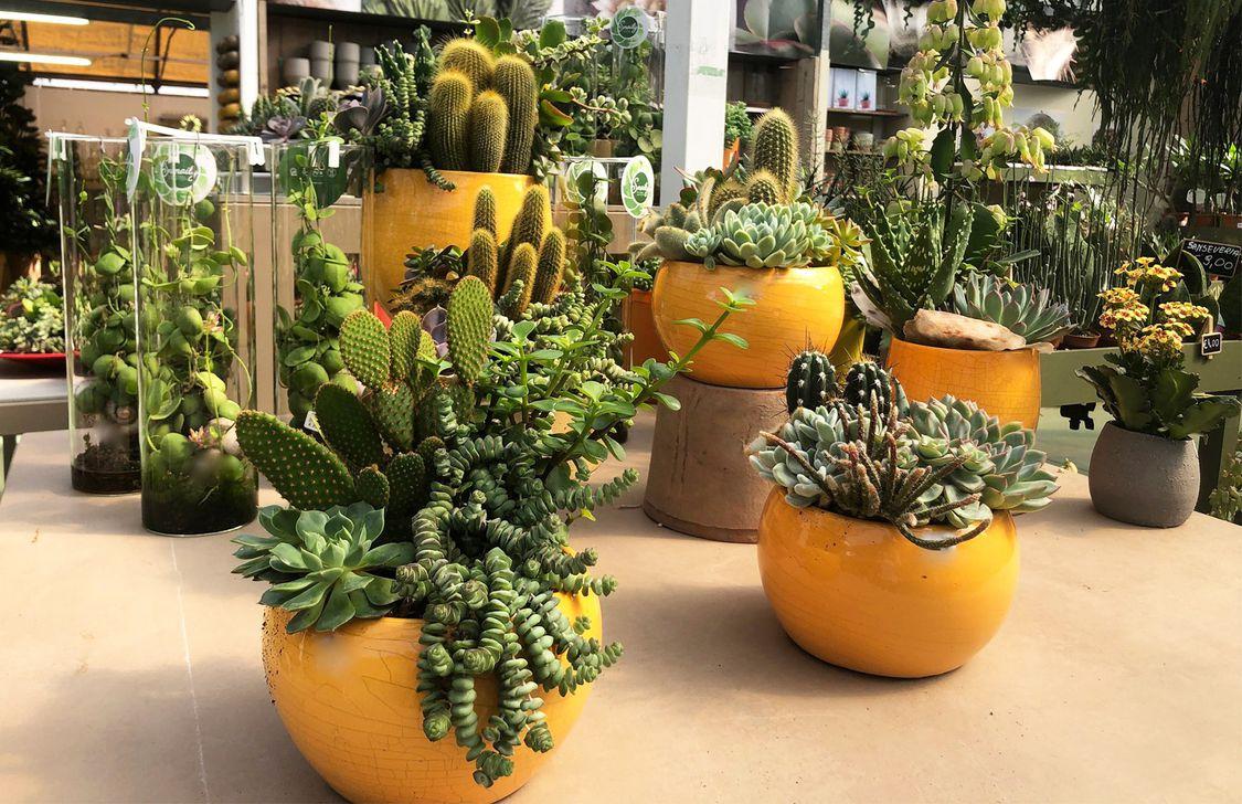 Garden Bulzaga - Interno