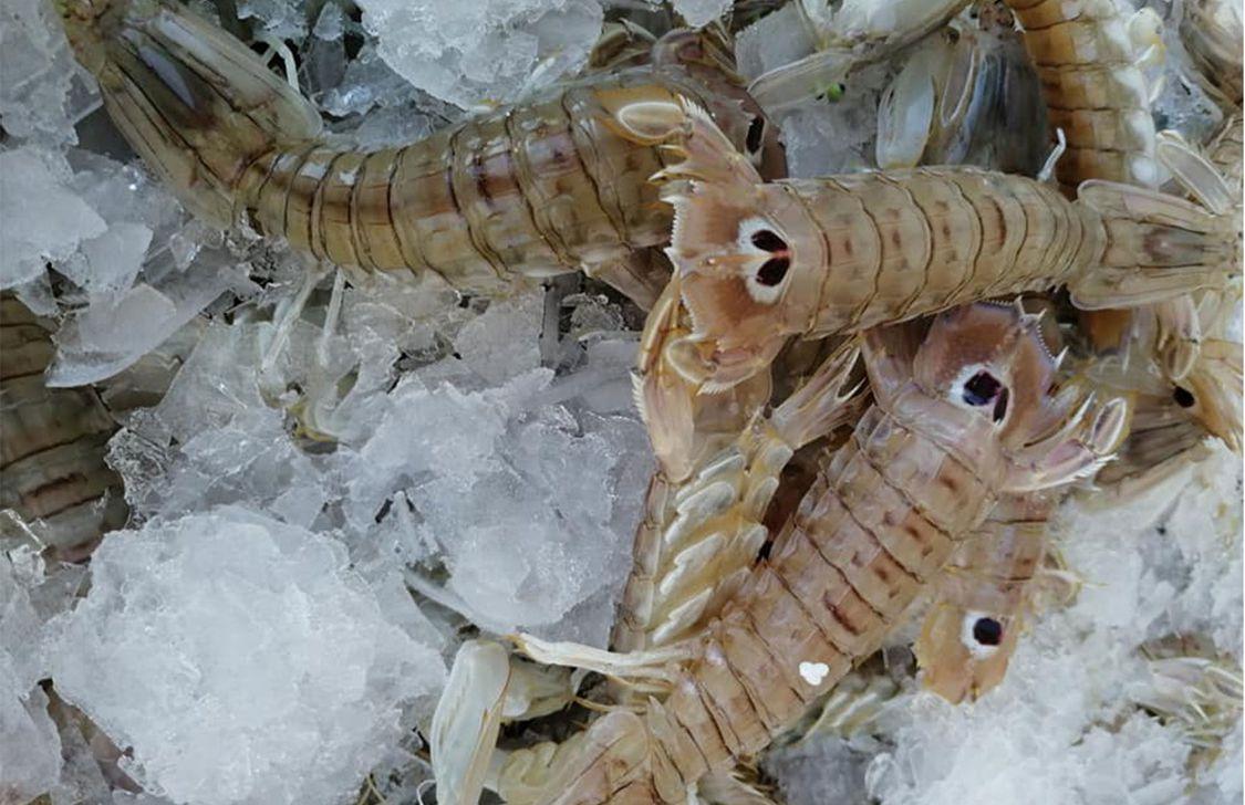 Pesce Miglio Zero - Canocchie