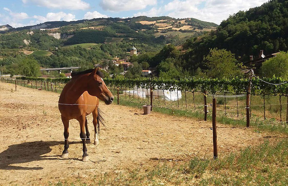 Agriturismo Campo Rosso - Esterno