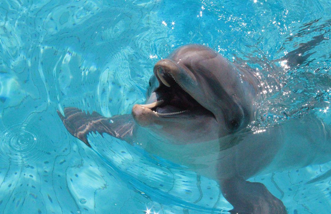 Oltremare - Delfino