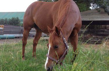Bosca  Ranch - cavallo