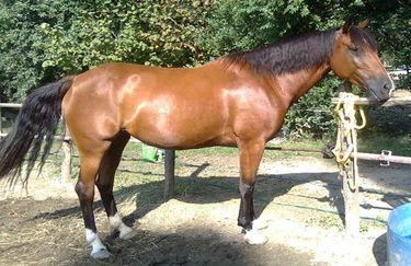 Scuderie del Borgo cavallo 2
