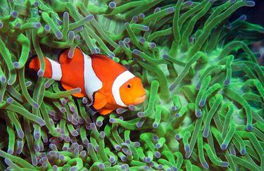 Acquario di Cattolica - Nemo