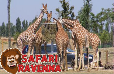 Safari Ravenna - Giraffe