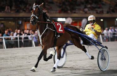 Ippodromo di Cesena - Cavallo