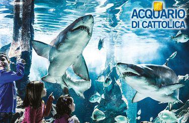 Acquario di Cattolica - Squalo