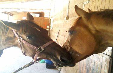 Scuderie del Borgo cavallo 3