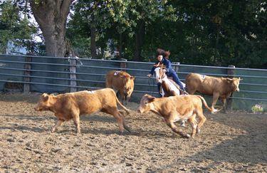 Bosca  Ranch - ranch