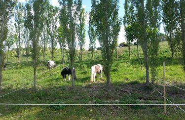 Centro Ippico dolcevita - Cavallo