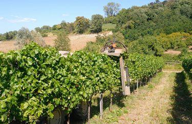 Campodelsole - Vigne