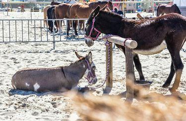 Aloha Beach passeggiata a cavallo 8