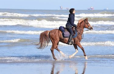 Aloha Beach passeggiata a cavallo 9
