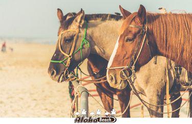 aloha-beach-cavallo2