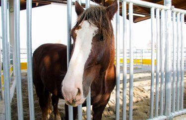 Fico Eataly World - Cavallo