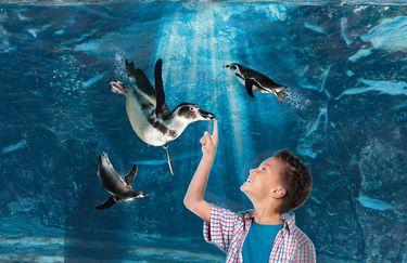 Acquario di Cattolica - Pinguino