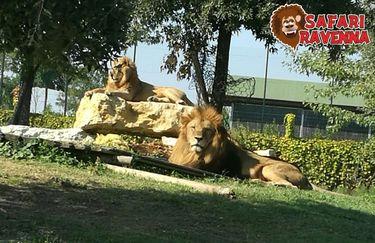 Safari Ravenna - leoni