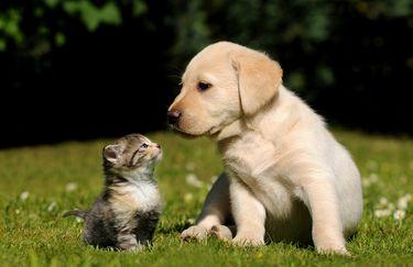 doggystyles-cane-gatto