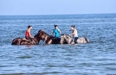 Aloha Beach passeggiata a cavallo 6