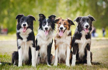 Animals Beauty Farm-Cani