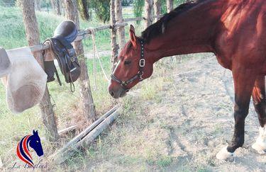 La Baglina Horse Club - Cavallo