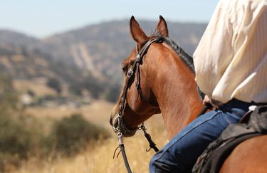 Bosca  Ranch