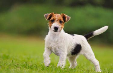 Animali Amici - Cucciolo