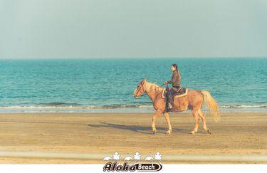 aloha-beach-cavallo3