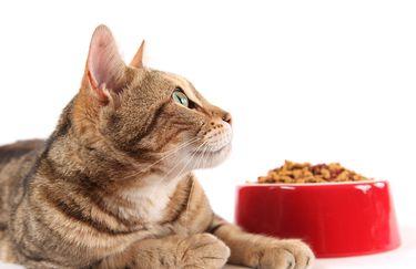 Ciotola Bio gatto