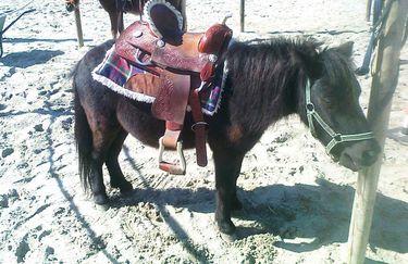 Scuderia Del Borgo - Pony