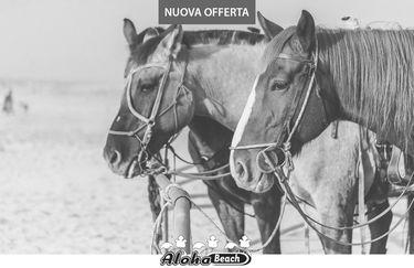 aloha-beach-cavallo8
