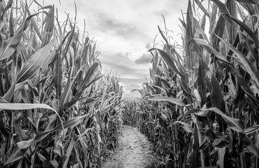 Exitum - Labirinto di mais