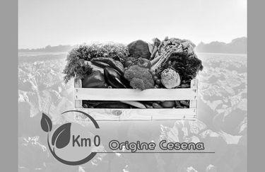 Green Project Azienda Agricola - Box