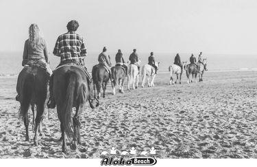 aloha-beach-cavallo7