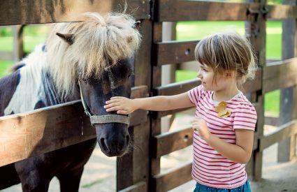 scuderia-del-borgo-pony