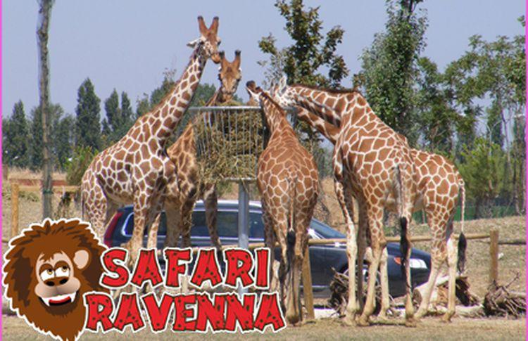 Zoo Safari Ravenna giraffe